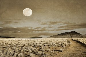 Full Moon Trail by Andrea Hazel Ihlefeld (available on Etsy at WildWildernessPhotos)