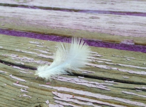 Small, white feather.