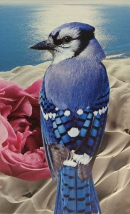 Blue Jay (Community)